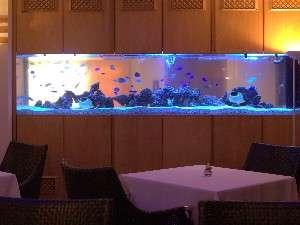 ロビーにある水槽にはたくさんの熱帯魚達♪