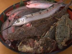 新鮮直送!県産魚を始め旬のお魚をご提供致します。