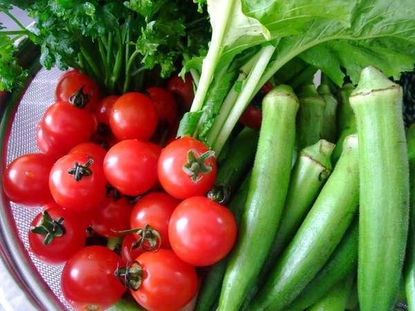 自家農牧場から採れるシャキシャキ有機野菜。安心・安全で新鮮な食材を心がけております。