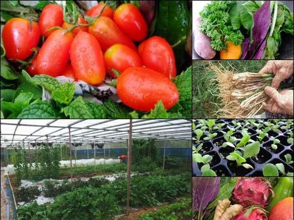 自家農牧場直送の食材をご用意!アグー豚や有精卵、無農薬野菜!自然の美味しさをそのままお届け致します。