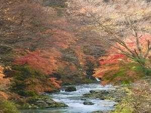 紅葉時期の道志川。コテージからもこの景色が楽しめます