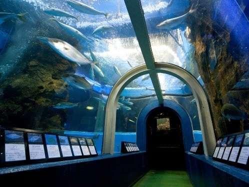 日本海側で最初に創立された水族館