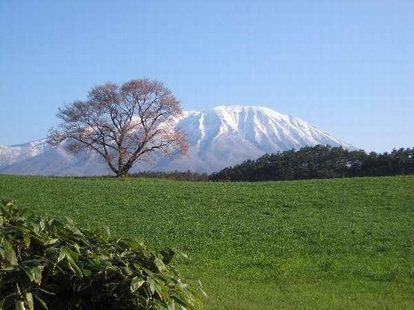 小岩井1本桜と残雪の岩手山