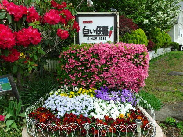 春にはこの花たちがお客様をお迎えします。