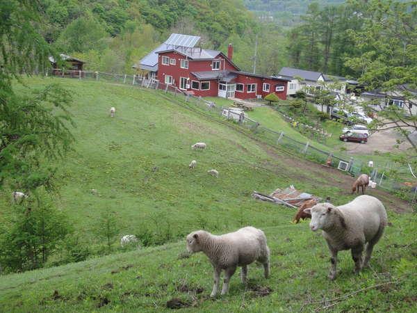 子羊と施設全景