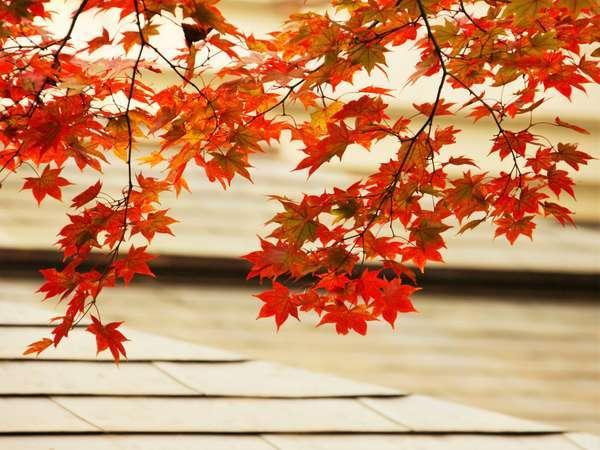 【9〜11月限定】「ちょっとうれしい秋の味覚プラン」旬の素材をお手頃に♪<スタンダード料理>