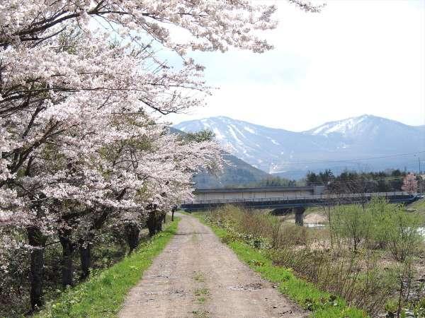 【お散歩道】当館裏手の桜並木
