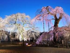 【桃いろ春のわくわく旅】 都心からわずか90分の秩父の春サイコ〜♪ さくら満喫プラン