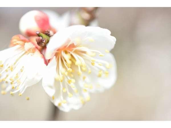 京都で春の訪れを感じてみませんか?【京の梅観賞プラン】梅昆布茶付き!!期間限定50%OFF!!