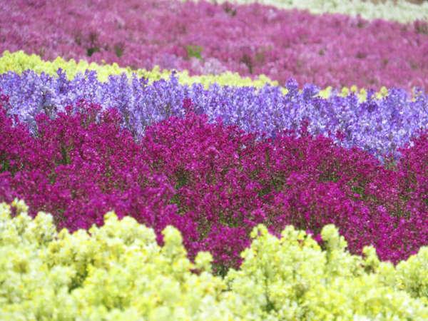 季節の花が咲き誇る「くじゅう花公園」まで、車で約15分