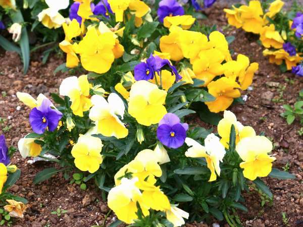 季節の花々がお出迎え