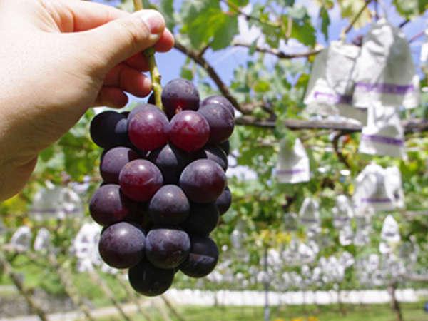 *フルーツ王国☆山梨!甲州市も桃やぶどうに代表される果物王国です!