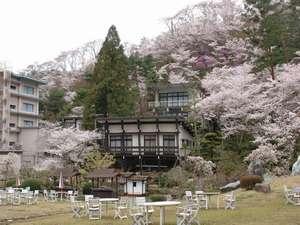敷地いっぱいに咲き乱れる桜・桜・桜