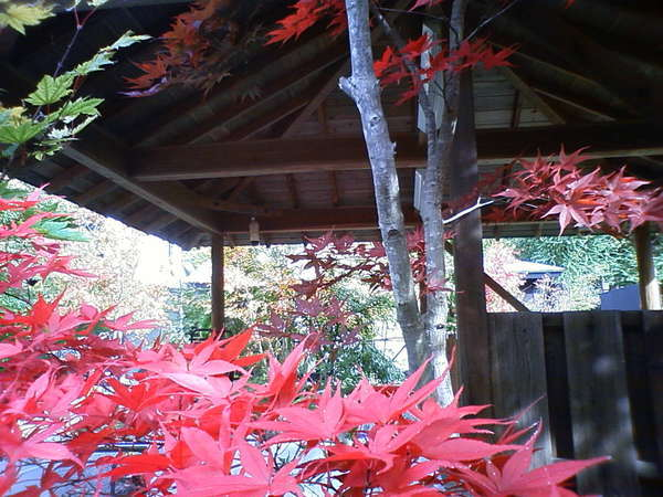 BBQ場の紅葉は、BBQ料理をとっても美味しくさせてくれます。