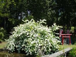 【お得な10%OFF(素泊まり)】新緑・ホタルを楽しむ初夏♪歴史ある天然湧水で心も体もポッカポカ!