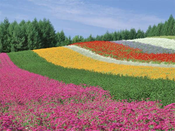 【花の虹 ファーム富田】彩りの畑》