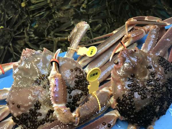 活きの良い活蟹だけを調理します。