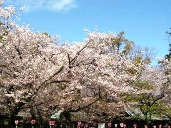 【春一番プラン】平日限定★朝食付き