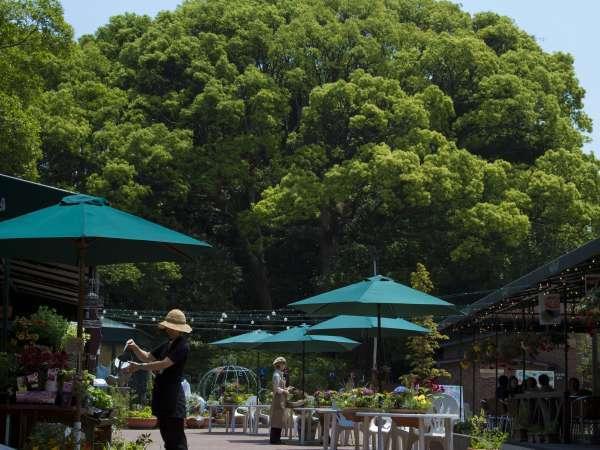 スローリゾート ぶどうの樹 杜の七種