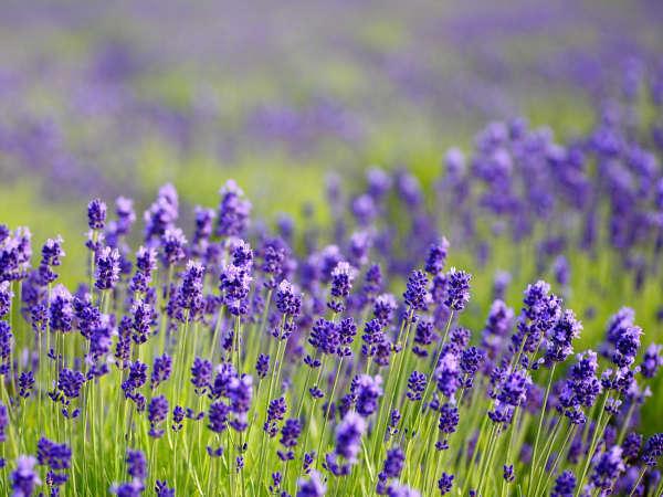 【朝食付】『アロマの香』〜癒しの空間でお休み下さい
