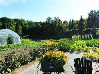 自家菜園で収穫、朝に調理人自ら収穫した野菜やハーブで創作するフラノフレンチを堪能