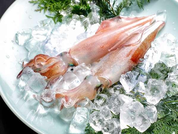 6月~8月限定!人気のとれぴち新鮮な活イカ!活ならではの食感と味をお楽しみください!