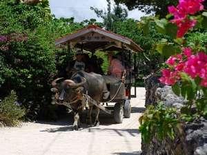 【離島パック】竹富島◆人気の水牛車&グラスボート