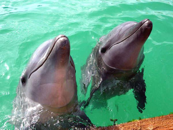 【家族の記念旅】イルカと遊ぼう!イルカと泳ごう!ドルフィンファンタジー体験☆朝食バイキング付