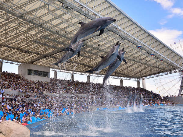 名古屋港水族館<入館券付きプラン> 海の仲間たちと遊ぼう♪