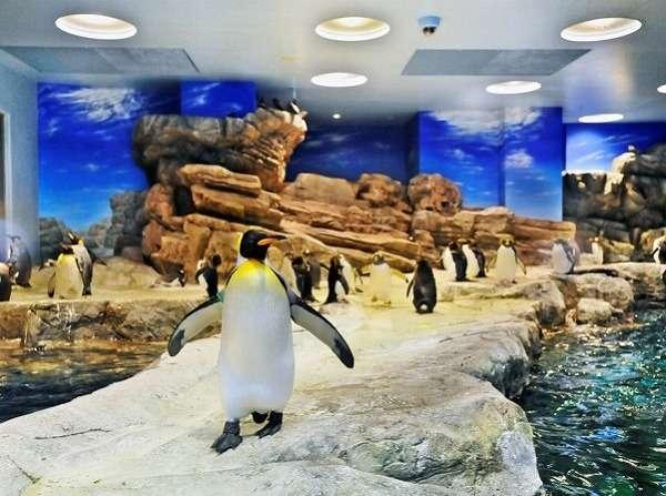☆水族館につれてって☆ 〜だってペンギンさんに会いたいんだもん♪〜 入場券+素泊りプラン