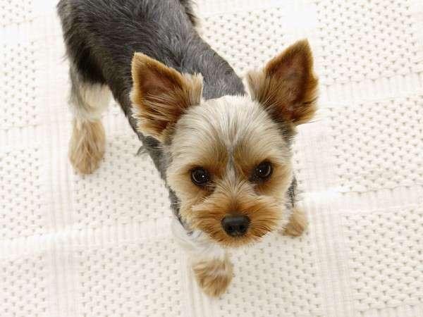 【愛犬と一緒に温泉旅行♪】ワンちゃんと一緒に自然の中で過ごす休日/ビュッフェ