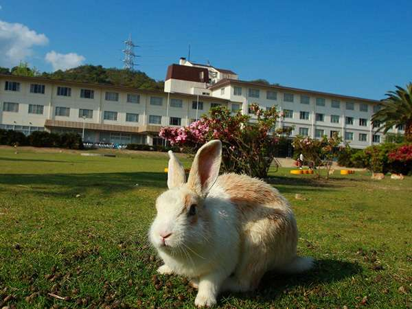 休暇村大久野島の外観