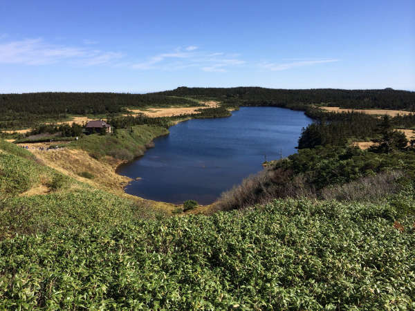 グリーンシーズンの八幡平は爽やかで気持ちがいいです♪高原植物観察やトレッキングにオススメ!