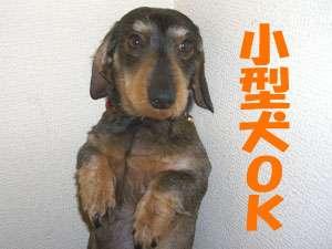 オーシャンビュー客室に泊まる★1泊朝食付★小型犬OK
