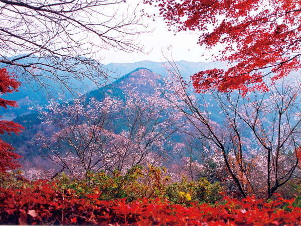 薬湯 冬桜の宿 神泉