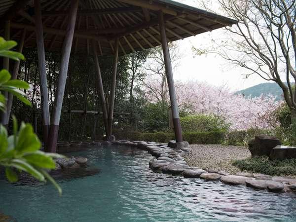露天風呂からも桜が楽しめます