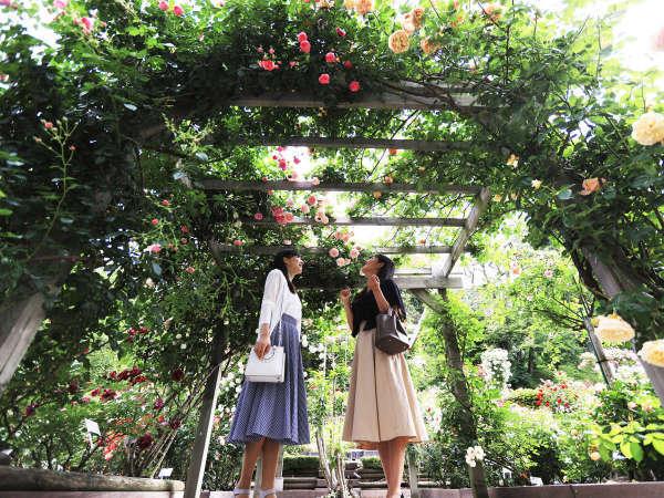 【花巻温泉バラ園】5月下旬から11月上旬まで6,000株のバラをはじめ、季節の花々が咲いています。