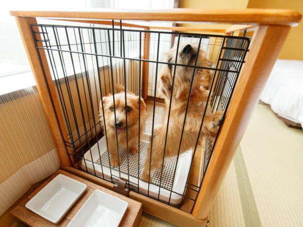 【ワンちゃんと同室宿泊♪】大切なペットと一緒に那須で温泉旅行!ご夕食は『季節の創作和食』