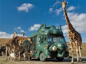 【動物園・アフリカンサファリ】大自然の旅に出発♪アフリカンサファリチケット付☆
