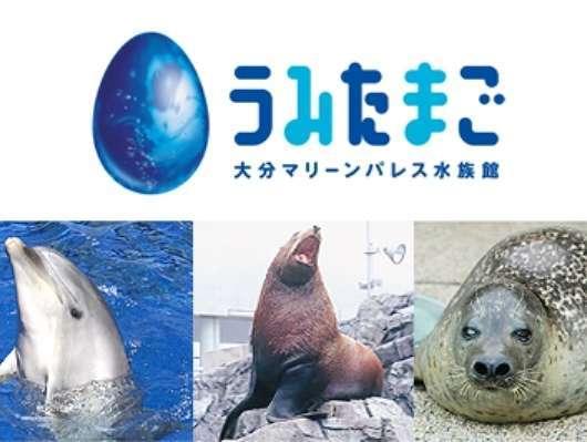 【水族館・うみたまご】海の人気者が大集合♪お得な『うみたまご』チケット付