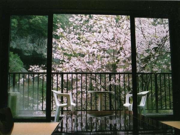 部屋からの花見は最高です