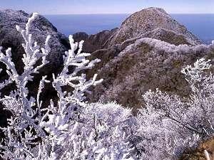 周辺・景観 冬の雲仙の風景。霧氷が幻想的な風景を作り出す!気象条件が整って初めて見る事ができる。