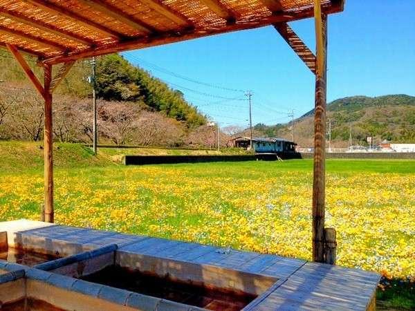 田んぼをつかった花畑の足湯からの風景。