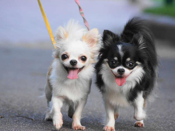 愛犬との旅行に♪小型犬2頭まで◎