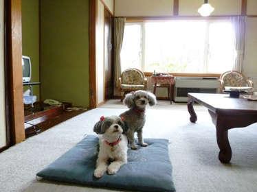 ペットと同伴専用のお部屋になります。(2部屋)我が家の愛犬2匹もお待ちしております。