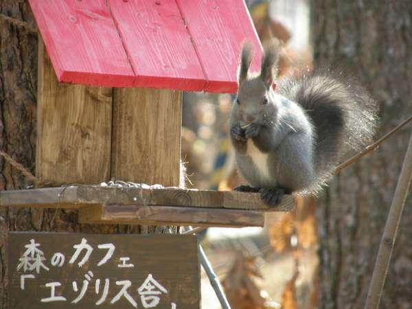 毎朝のように庭にやってくる「エゾリス君」(秋)