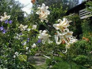 ペンション 白樺の宿 結の外観