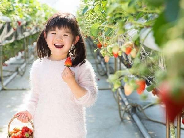 【期間限定】栃木の至宝「とちおとめ」食べ放題いちご狩り体験プラン  1泊2食付