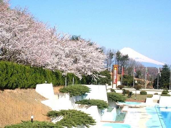 【伊豆/桜めぐり旅】中伊豆ワイナリーの桜色ワインプレゼント。ワインを飲みながらお花見を。