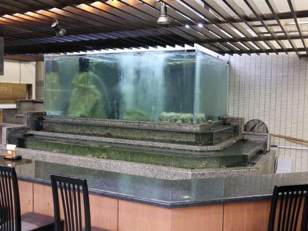 レストラン海遊亭の大型ひな壇水槽